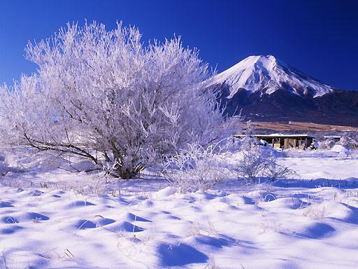 yuki_8.jpg